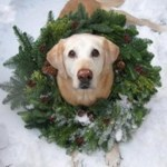 merry christmas dog wreath