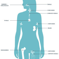 Building a Healthy Immune System